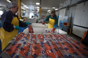 people packaging fish