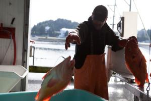 man tossing fish into bucket